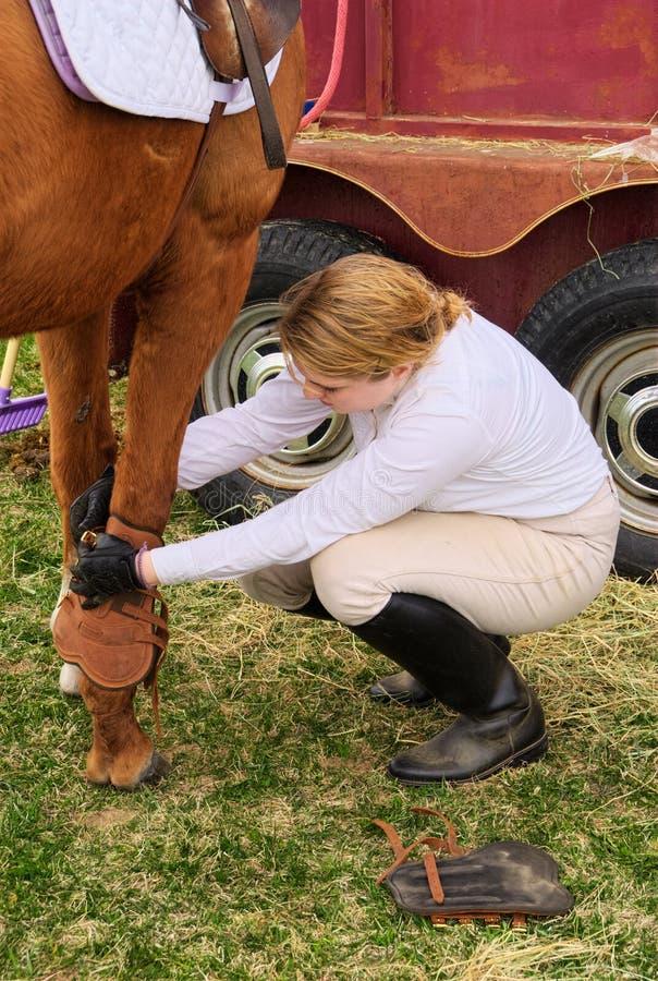 Préparant le cheval en démonstration images libres de droits