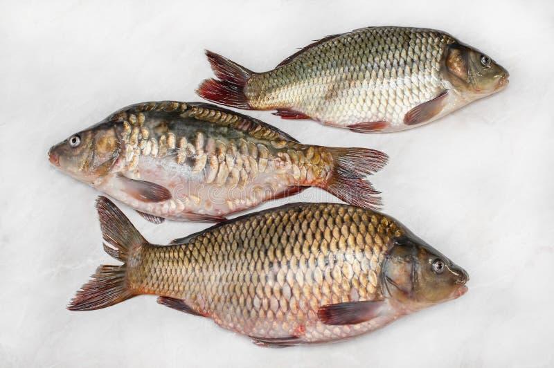 Préparation de carpe pour envoyer à la boucherie et faire cuire le fond frais Trois poissons aux échelles photos stock