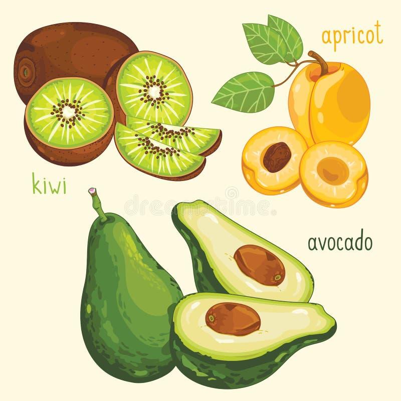 Préparation de fruit frais, illustration de vecteur illustration libre de droits