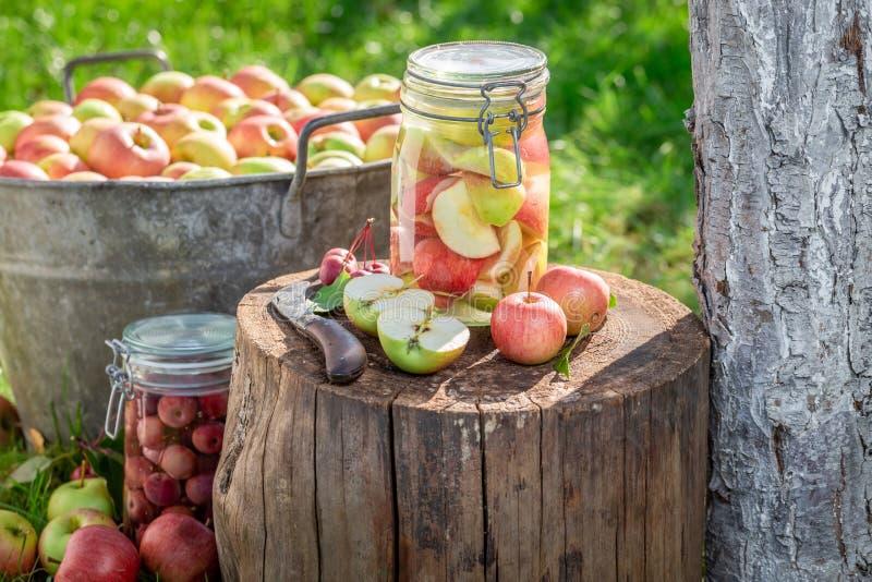 Préparation de la compote de pommes maison dans le jardin verdoyant images libres de droits