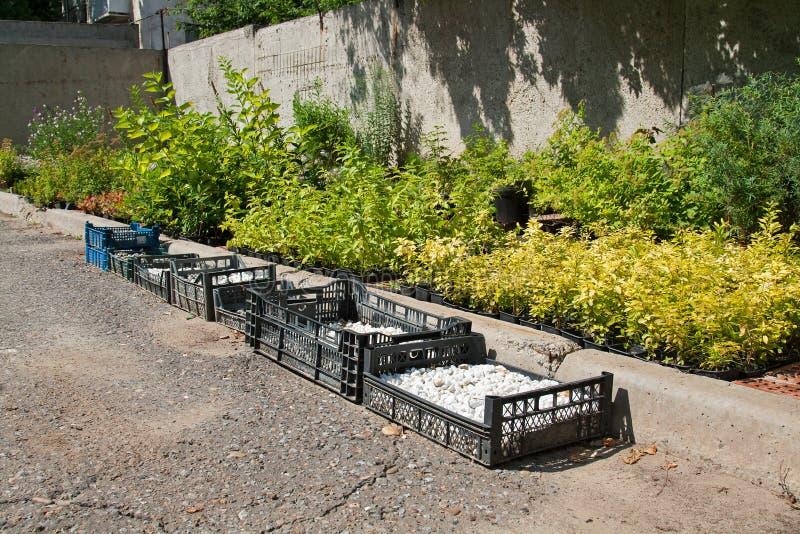Préparation des jeunes plantes et du gravier décoratif photo libre de droits
