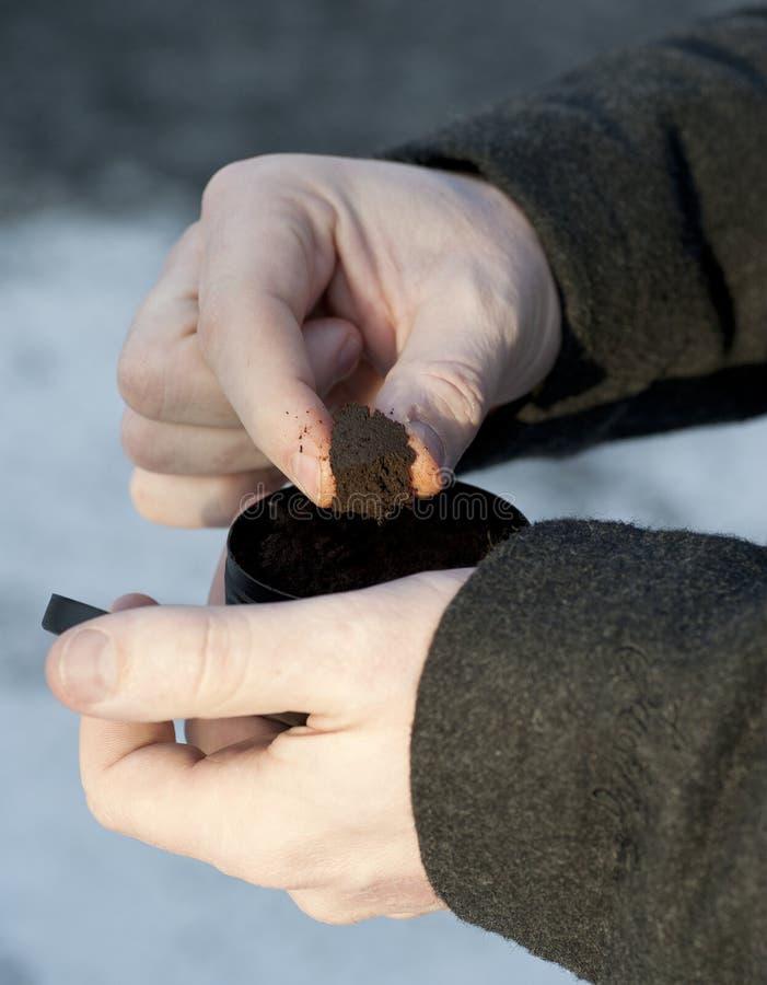 Préparation du tabac à priser humide photo stock