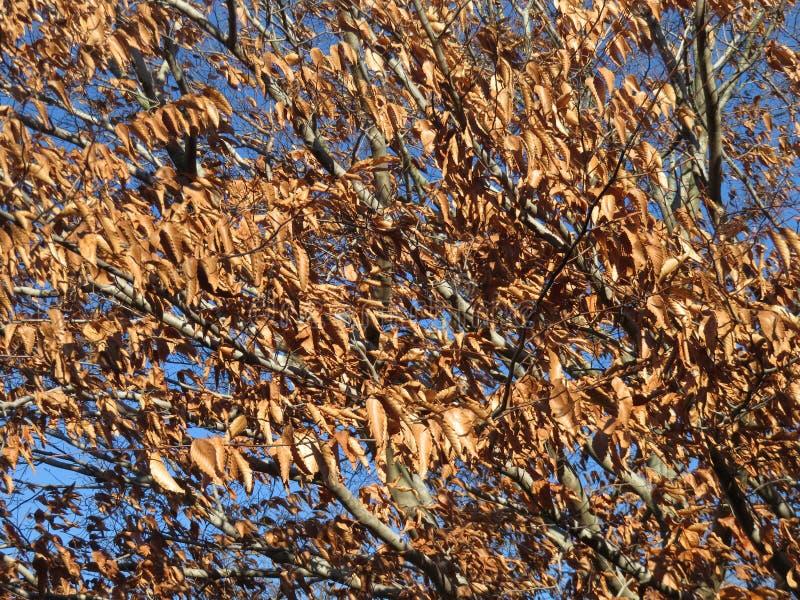 Préparez pour tomber l'arbre photographie stock libre de droits