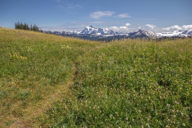 Prés alpins de fin d'été sur le clivage et le Mt Shuksan d'horizon images stock