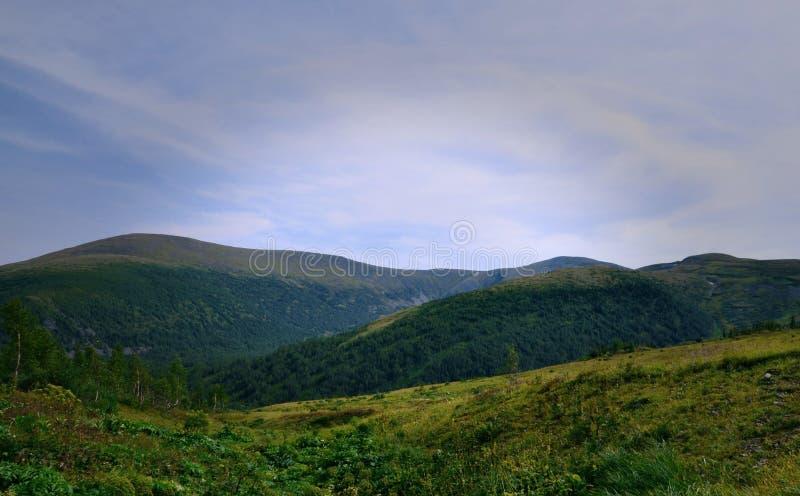 Prés alpins merveilleux image libre de droits