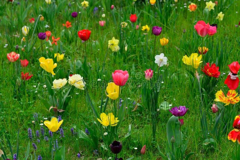 Prés de ressort avec les fleurs colorées images stock
