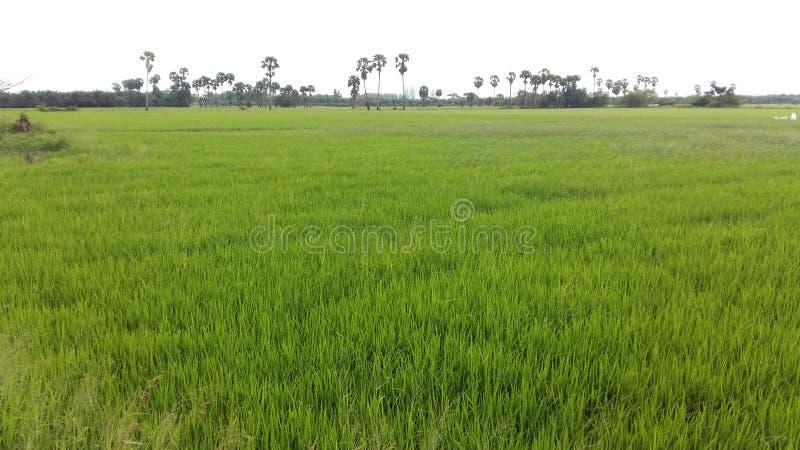 Prés, prés, forêts, montagnes, arbres, sol, champs, agriculteurs, agriculteurs images stock