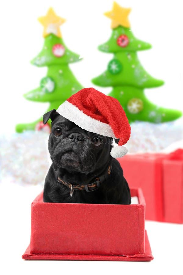 Présent de roquet de Noël photographie stock libre de droits