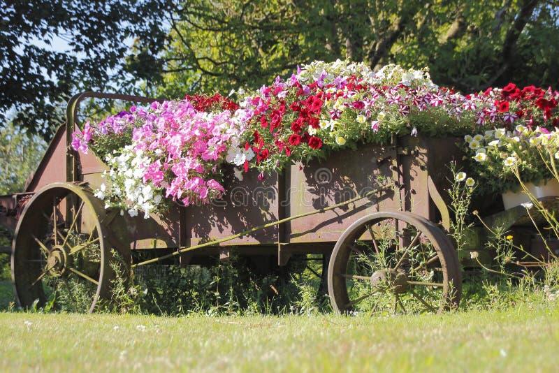 Présentation florale extérieure luxuriante photographie stock