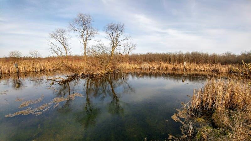Préservation de la nature de quatre saisons - le Lac Léman, WI images libres de droits