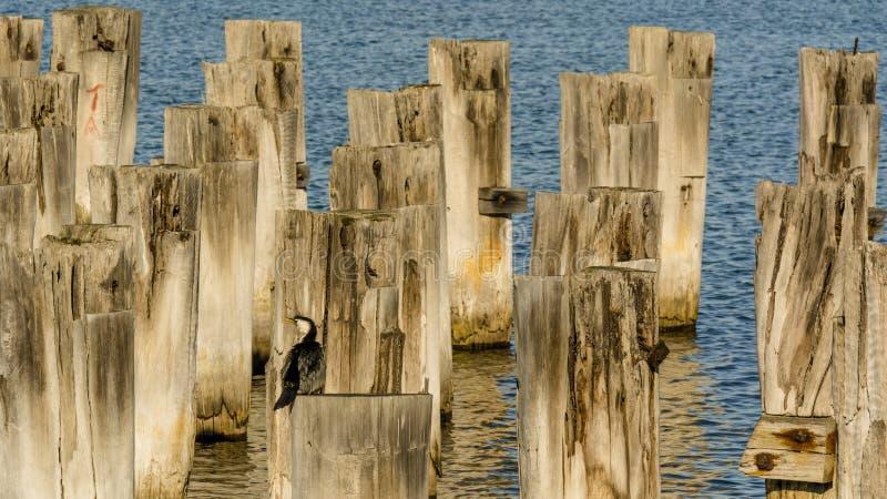 Príncipes Pier, Melbourne, Australia foto de archivo