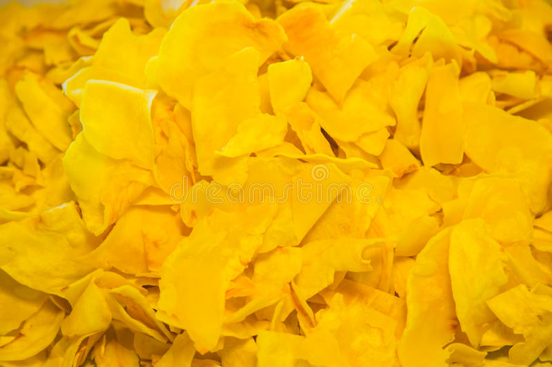 Próżnia Liofilizujący Durian zdjęcie royalty free