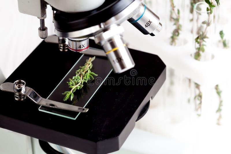 Próbne ziele próbki na mikroskopu obruszenia zakończeniu up obraz royalty free