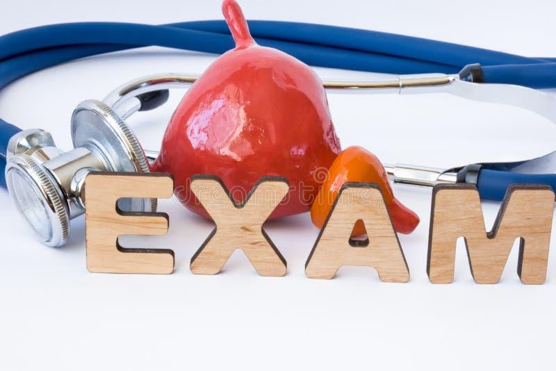 Próstata y concepto del examen o del examen de la vejiga Forma de la próstata con la vejiga cerca del estetoscopio y del examen d foto de archivo libre de regalías