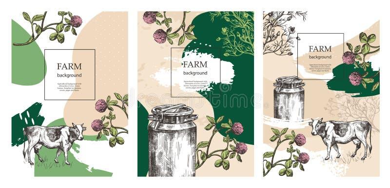Prövkopiaräkning för jordbruks- broschyr Milk kan, ko- och ängblommor Mallar för mejerilantgård Bakgrunder f?r vektor illustrationer