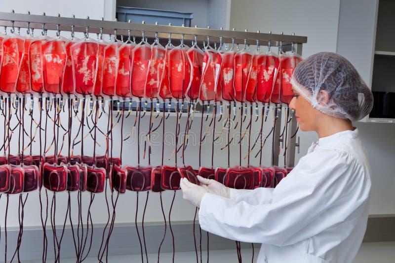 Prüfung des Spenderbluts im Blutlabor stockbild