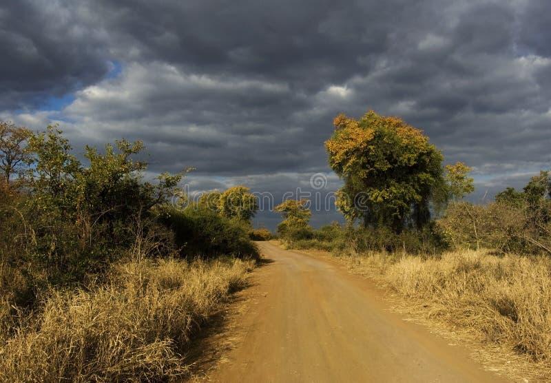 Prążkowana drzewo droga gruntowa obraz stock