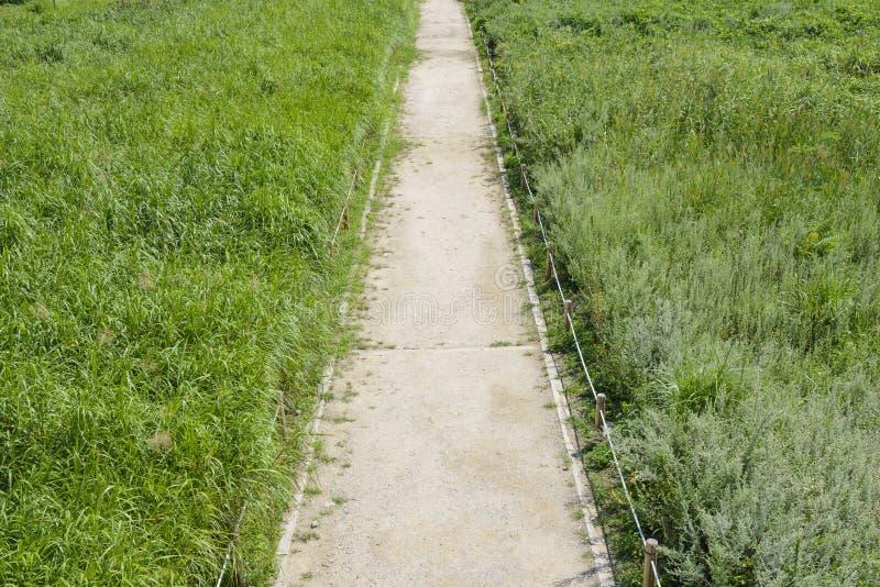 Prążkowana prosta ścieżka w srebnej trawy polu fotografia royalty free
