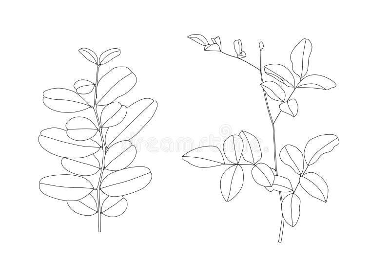 Prążkowani deseniowi liście są bukietem świeżym i czarny kreskowy Pojedynczy liścia wzoru czerń Przynosi kolor dekoruje ilustracji