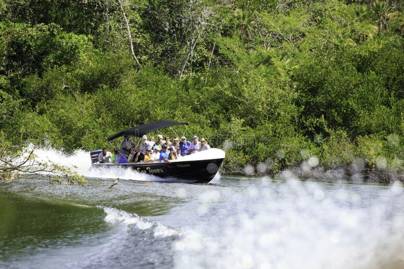 Prędkości łódź na Belize rzece zdjęcie stock