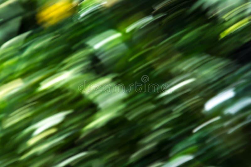 Prędkości natury abstrakta zieleni tła lasowi drzewa zamazujący obraz stock