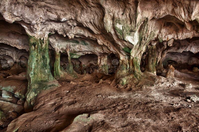prętowy Caicos jaskiniowy konchy wnętrza środek obrazy royalty free