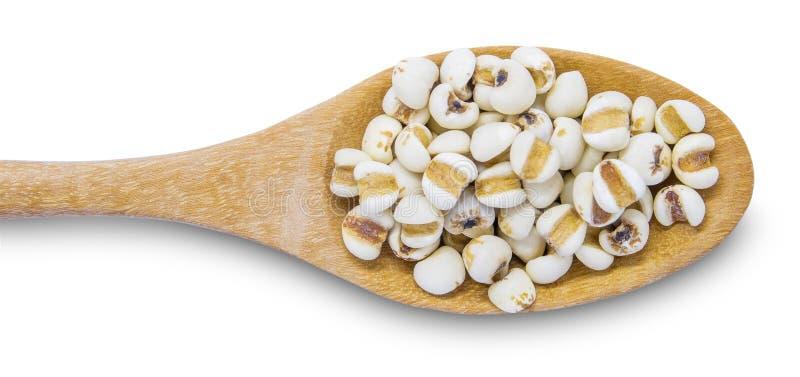 Prac łzy lub Coix Łzowy adlay w drewnianej łyżce są bardzo odżywczym zbożem Ziarna są bogaci w kopalinach, witaminy, żywienioniow zdjęcia stock