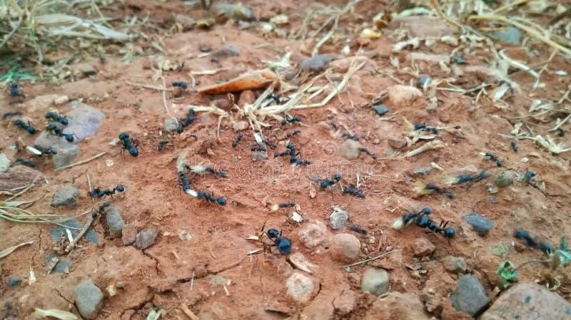 Prac mrówki przy pracą obraz stock