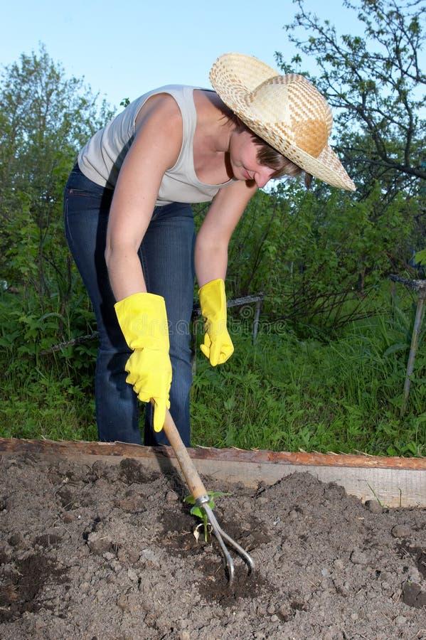 praca ogrodowa obrazy stock