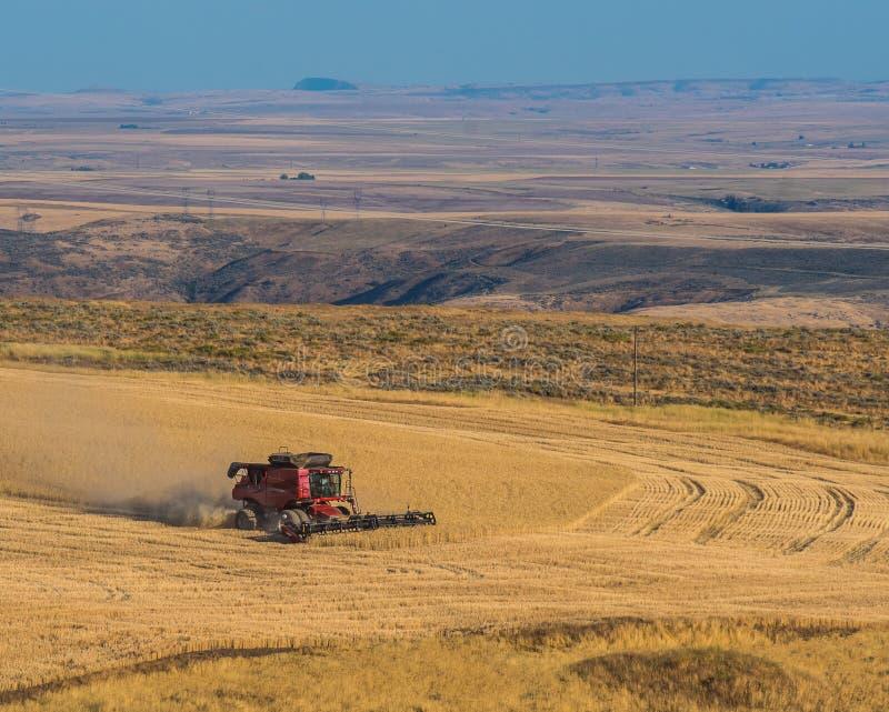 Praca Z widokiem Pszeniczny żniwo w Wysokiej pustyni obrazy stock