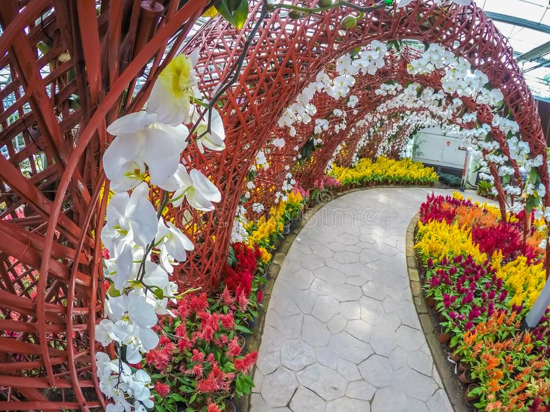 Prachinburi,泰国January11,2018:在Dasada画廊的美好的花和植物显示 库存图片