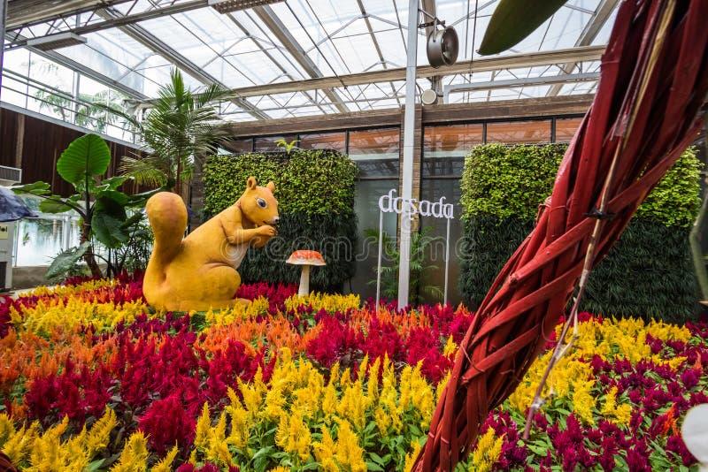Prachinburi,泰国January11,2018:在Dasada画廊的美好的花和植物显示 免版税库存照片