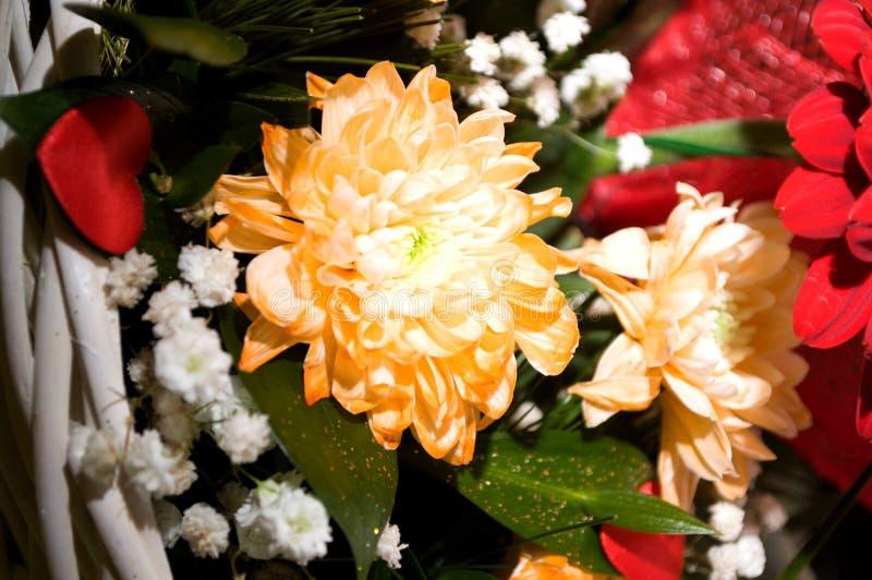 Pracht der roten Rosen seiner Schönheit und Frische stockfotos