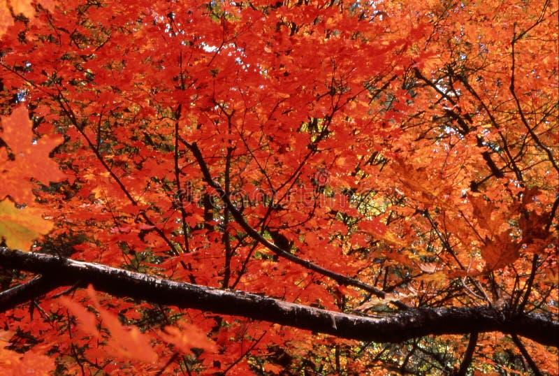 Pracht des Herbstes stockbilder