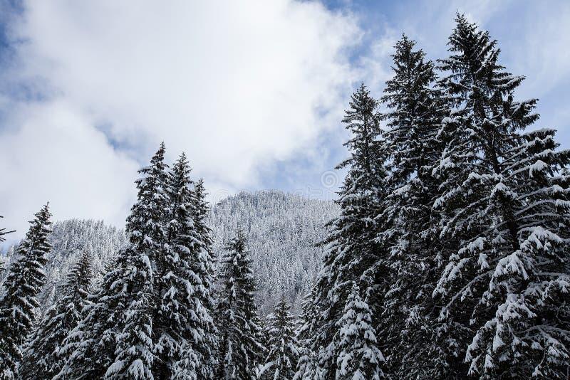 Prachtig en stil mooi die de winterlandschap met sneeuw wordt behandeld stock afbeeldingen