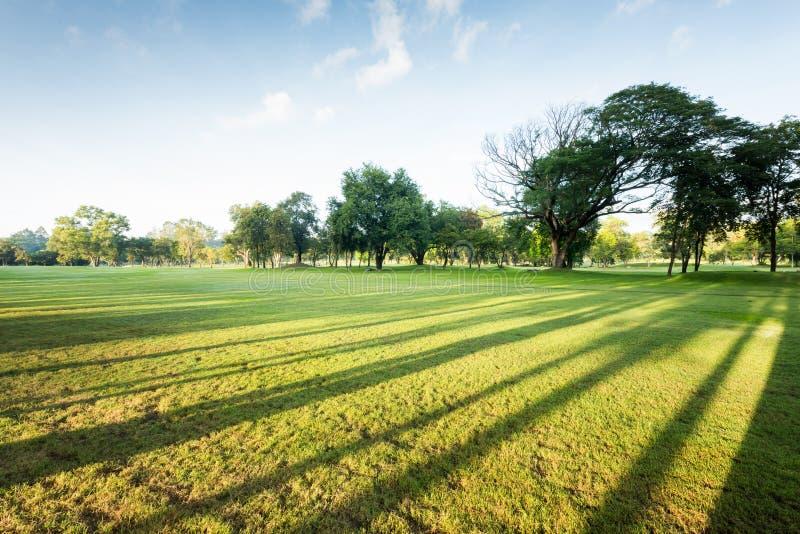 Prachtig groen parklandschap in de ochtend met blauwe hemel stock afbeeldingen