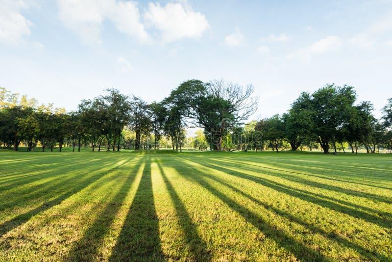 Prachtig groen parklandschap in de ochtend met blauwe hemel royalty-vrije stock foto