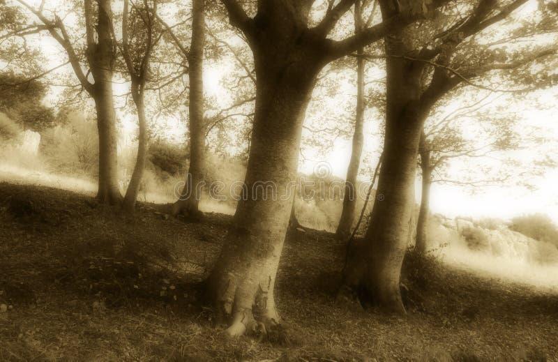 Prachtig kreupelhout, ouderwetse sepia tint stock foto's