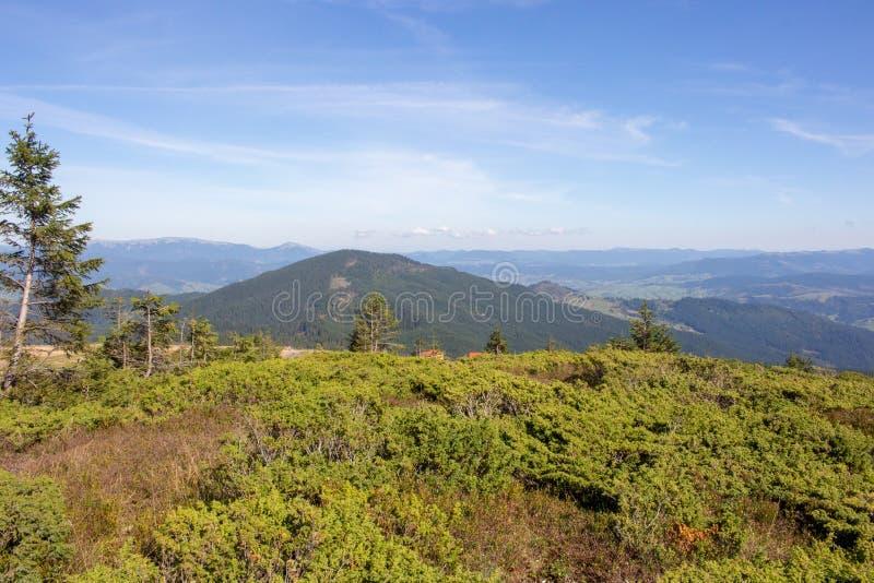 Prachtig panorama van de bergen van de Karpaten, de Oekraïne Altijdgroene bosheuvels De bergenlandschap van de Karpaten stock afbeelding