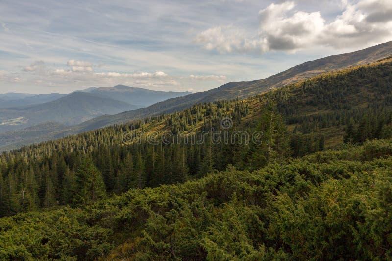 Prachtig panorama van de bergen van de Karpaten, de Oekraïne Zet Hoverla met grote altijdgroene bosheuvelvoorgrond op royalty-vrije stock afbeelding