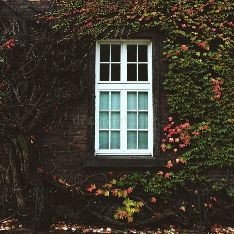 Prachtig venster stock foto's