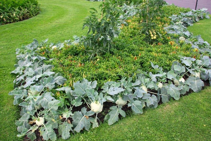 Prachtig verfraaid bloembed van groenten in een openbaar park in Londen stock foto's