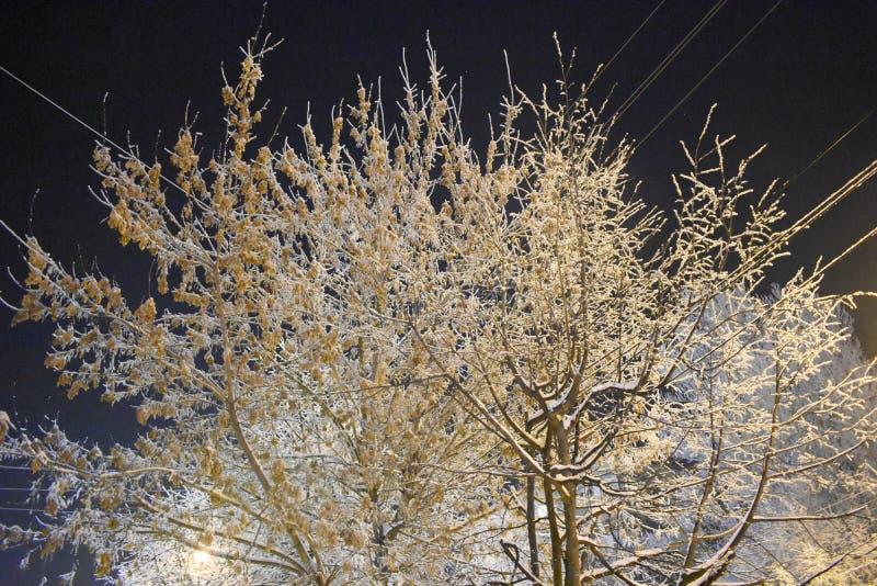 Prachtig verfraaid met van de de steeg elektrodraad van de sneeuw stedelijke boom het huislichten in de Vensters stock afbeeldingen