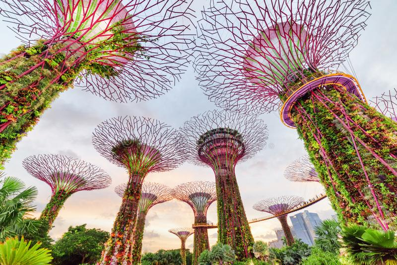 Prachtige avondmening van het Supertree-Bosje met Skyway royalty-vrije stock foto