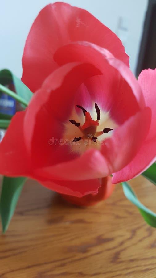 Prachtige bloem royalty-vrije stock foto