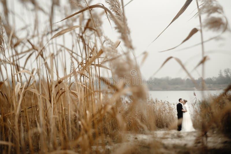 Prachtige bruid en stijlvolle bruidegom die 's avonds zachtjes omhelst in het strandmeer, mooi zachtaardig moment, ongebruikelijk royalty-vrije stock foto's