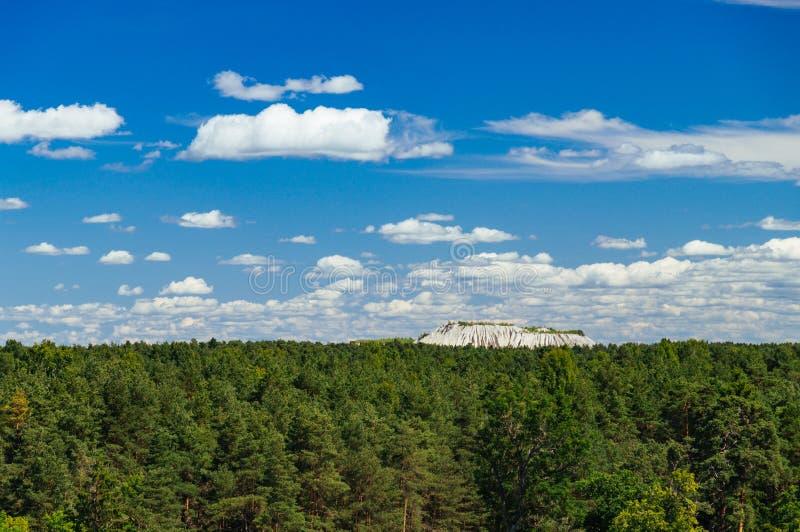 Prachtige cloudscape over naaldbos stock afbeeldingen