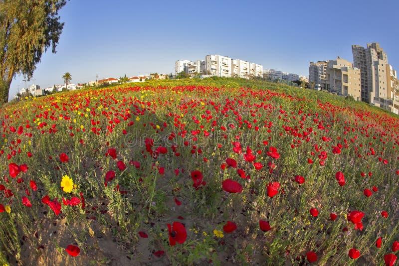Prachtige de lentebloemen in grote moderne stad stock foto
