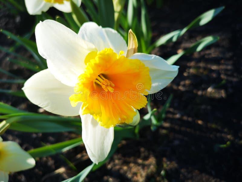 Prachtige de lentebloemen royalty-vrije stock fotografie