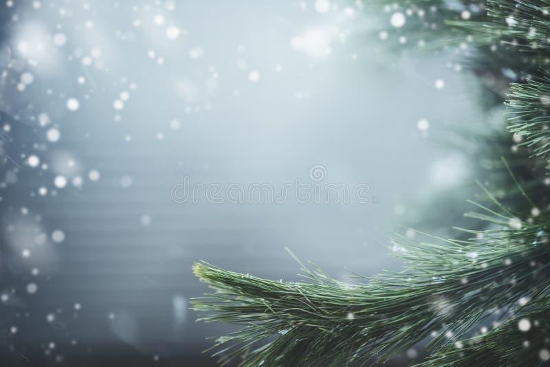 Prachtige de winterachtergrond met spartakken en sneeuw De wintervakantie en Kerstmis stock afbeelding